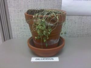 RIP Dillicious
